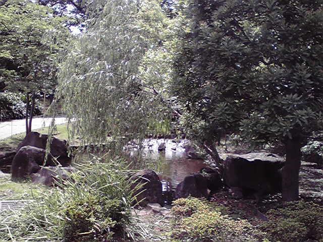 6月15日梅雨晴れ犬