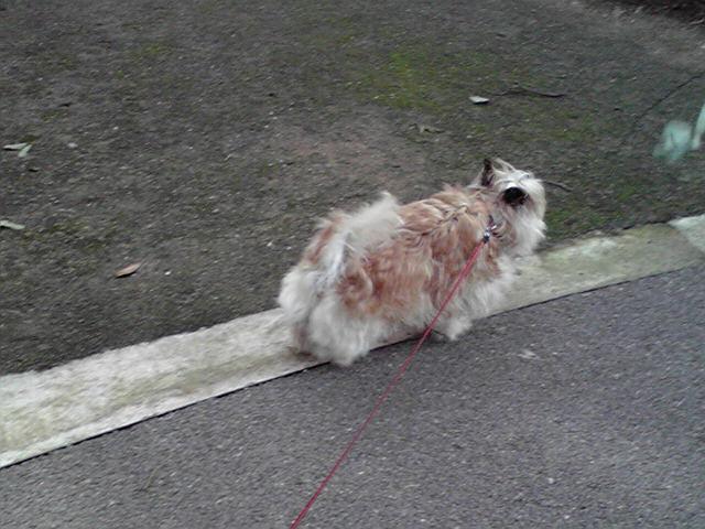 6月20日曇り犬