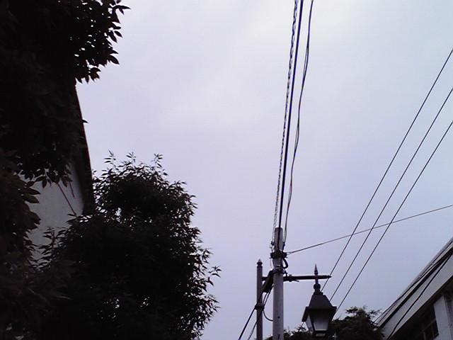 6月27日梅雨犬