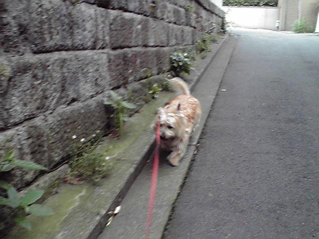 6月30日カート犬