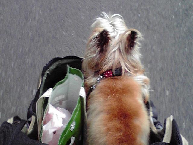7月4日買い物犬