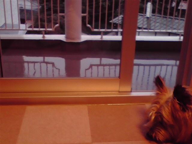 7月9日雨犬