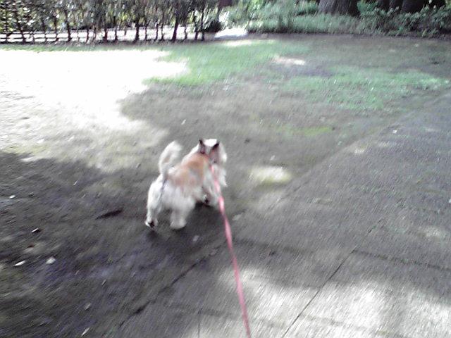 7月10日暑い犬