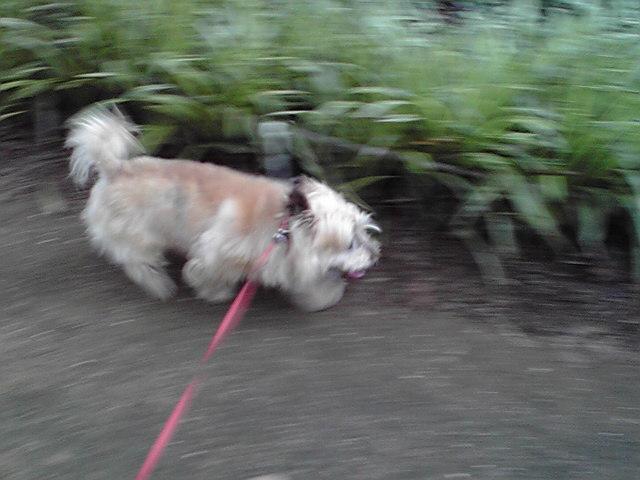 7月11日ミンミン犬