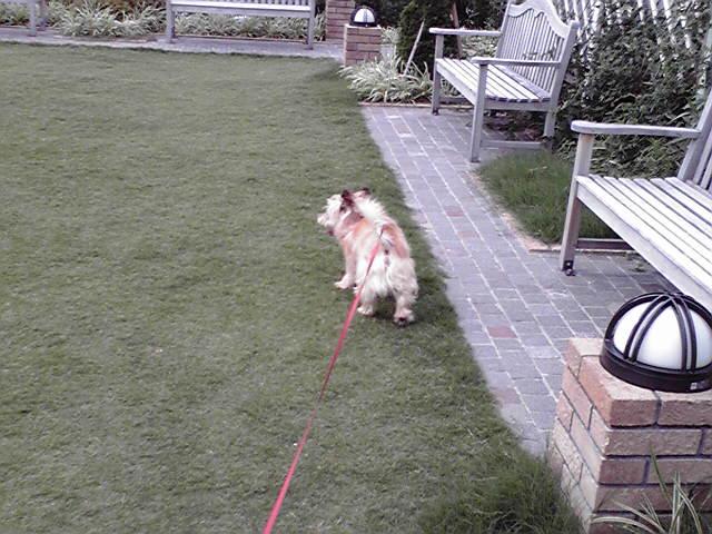 7月12日風に吹かれる犬