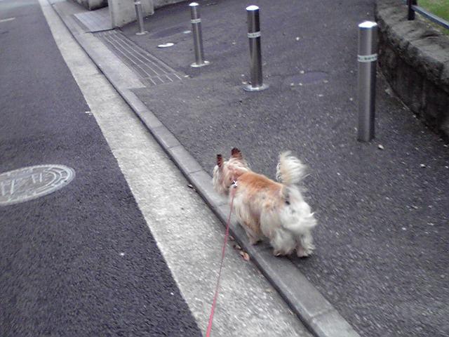 7月13日shopping<br />  犬