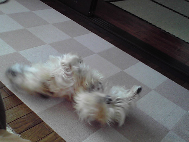 7月15日赤毛の犬