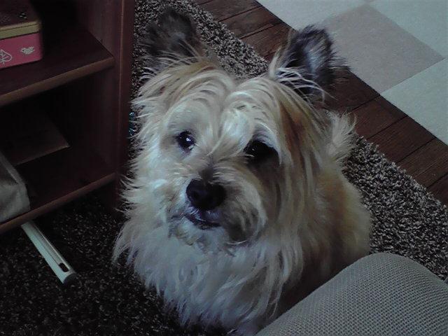 7月16日文句を言う犬
