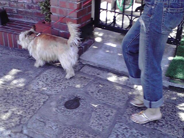 7月19日バイバイ犬
