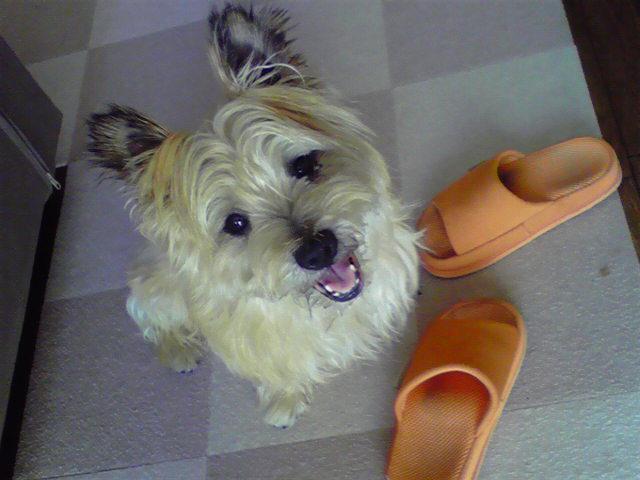 7月22日おやつ犬