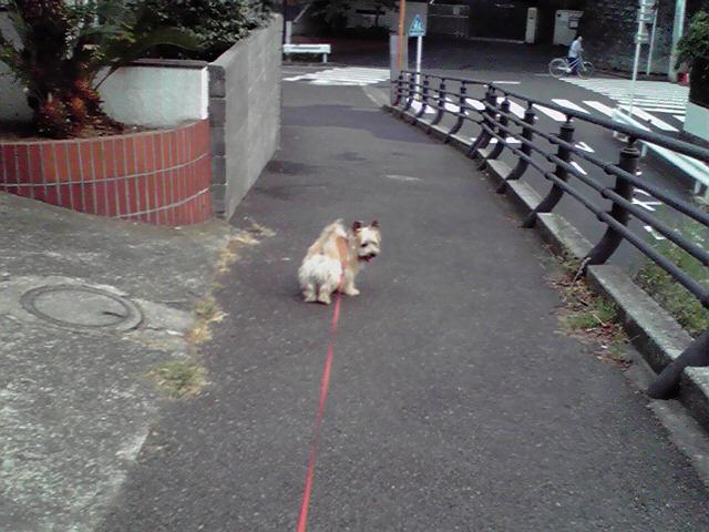 7月23日お土産犬
