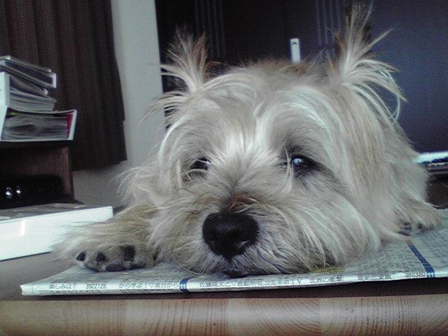 7月25日昼寝犬
