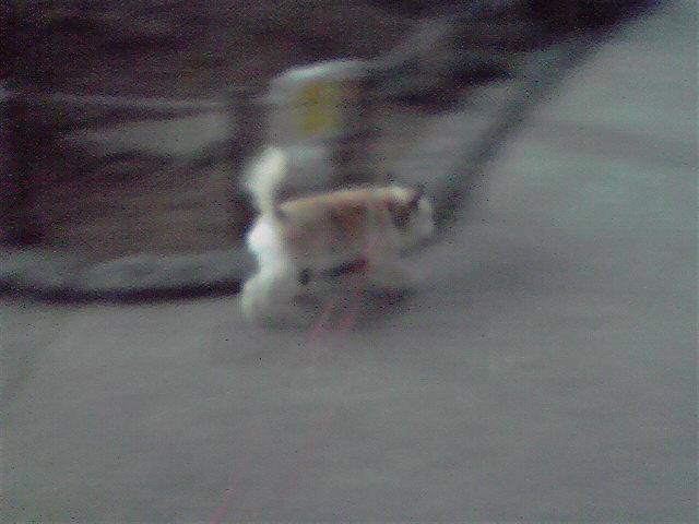 7月26日隠れヨコハマ犬