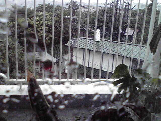 7月29日嵐犬