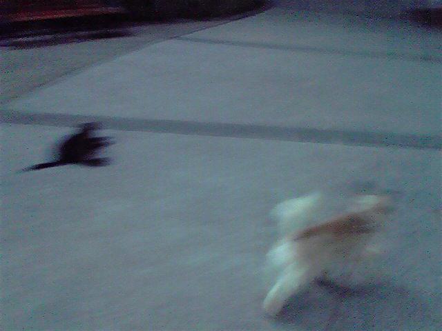 8月2日お散歩犬