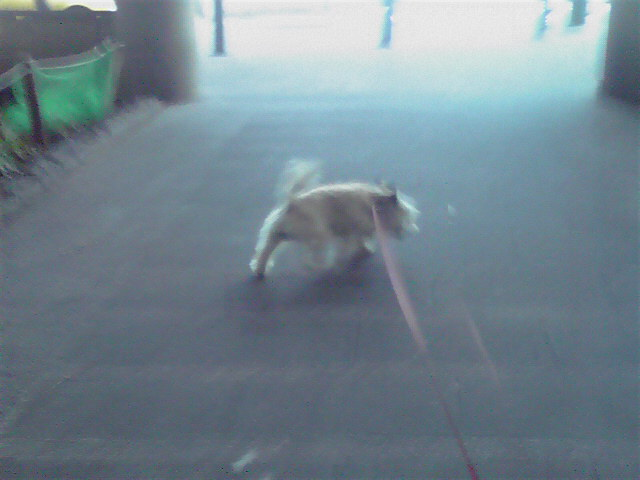 8月5日転ぶ犬