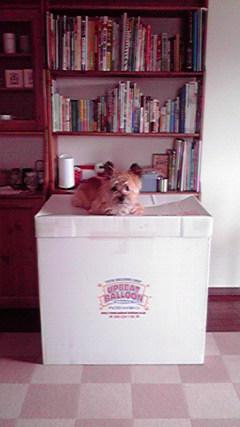 8月6日お誕生日犬