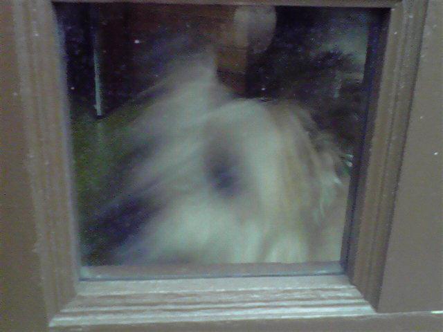 犬窓と猫窓