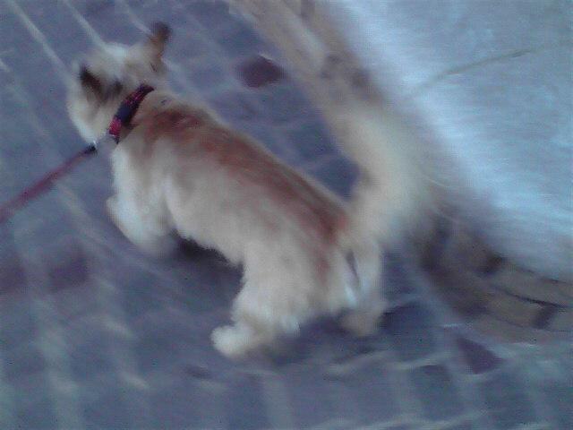 8月24日夕方犬