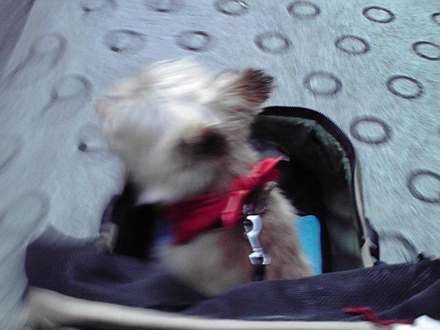 8月25日通院犬