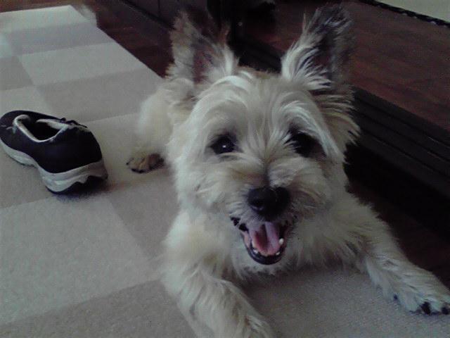 8月26日スイカ犬