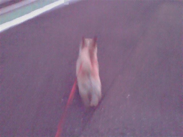 8月28日トワイライト犬