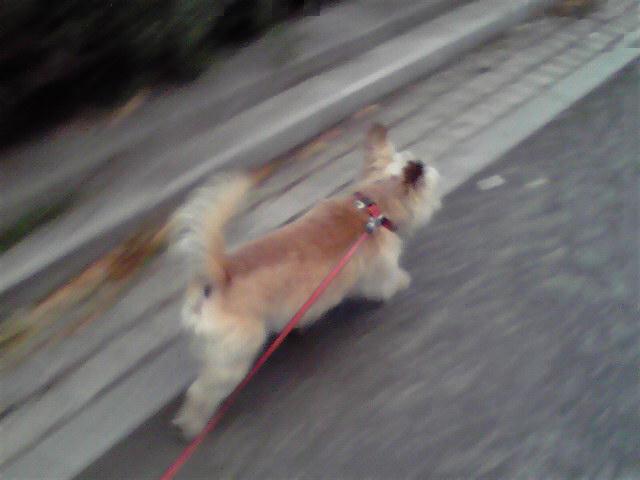 8月29日オレンジ犬