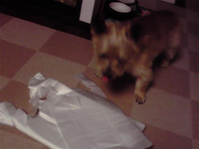 8月30日エコを考える犬