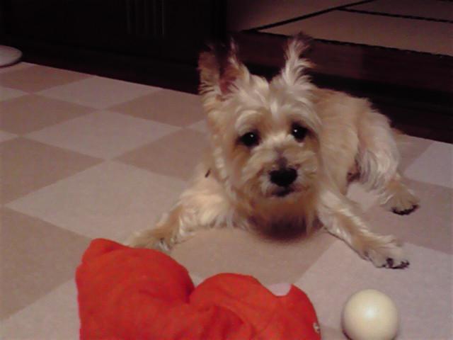 9月9日風呂犬