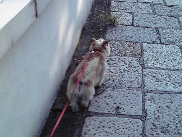 9月10日秋犬