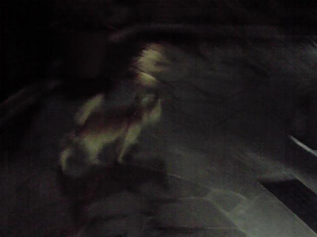 9月14日ゲリラ犬