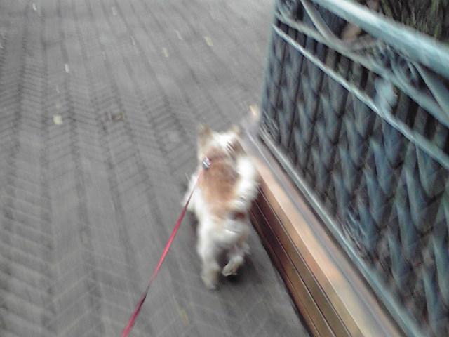 9月15日涼しい犬