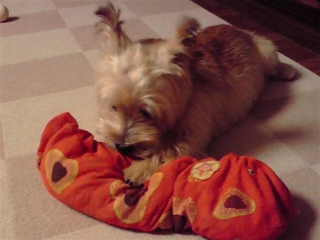 9月16日赤レンガ犬
