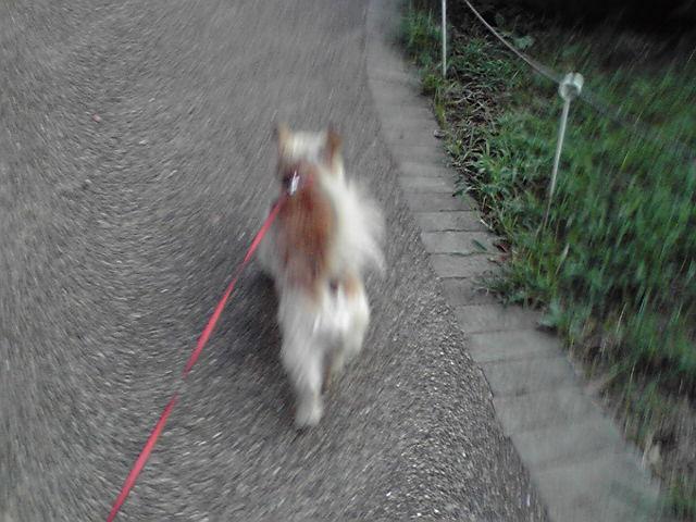 9月17日チャーミング犬