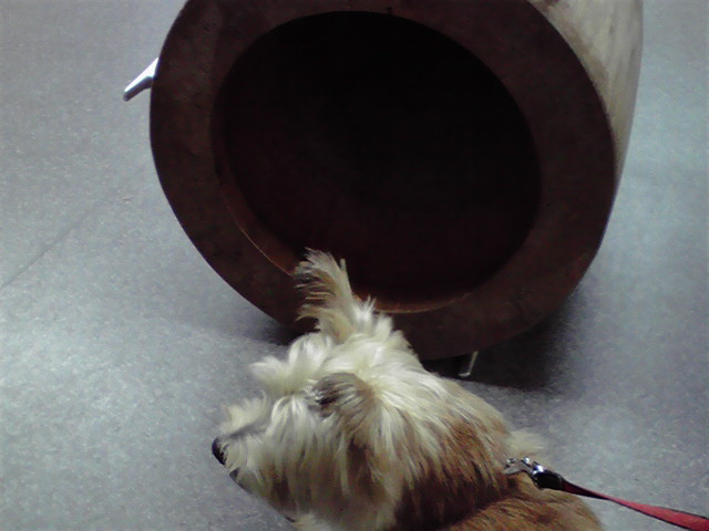 9月19日病院犬