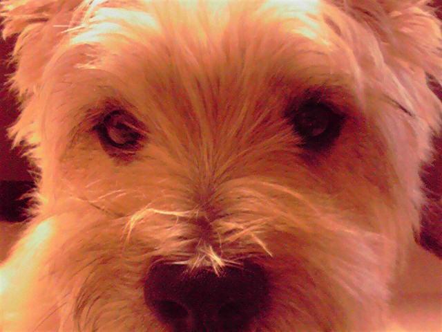 9月23日寒い犬