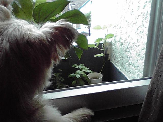9月24日冬犬