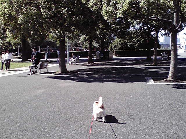 9月25日台風一過犬