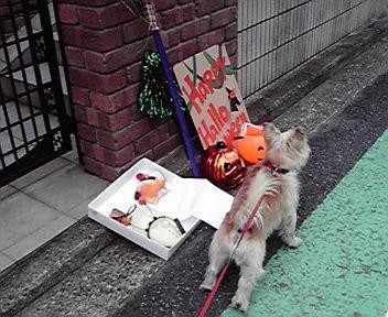 9月26日秋犬