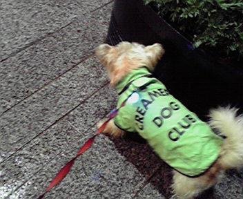 9月27日雨犬