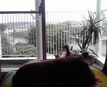 9月30日秋雨犬