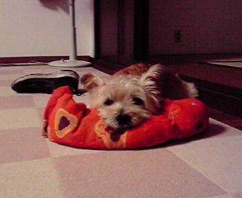 10月2日留守番犬