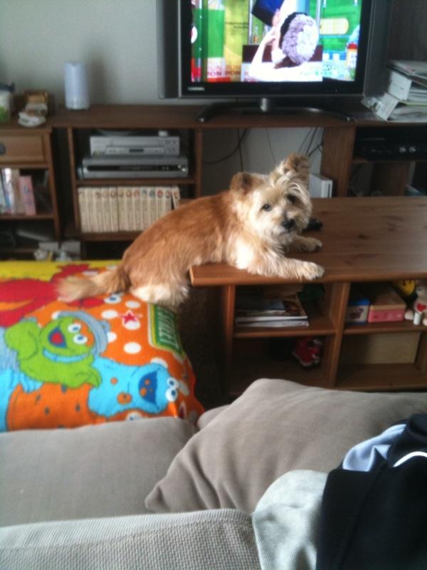 10月4日ソファーに腰掛ける犬