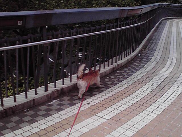 10月6日まだまだ暑い犬