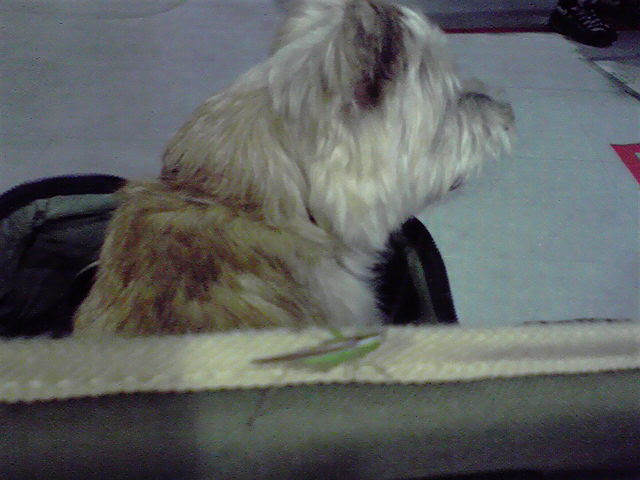 10月10日洗われた犬