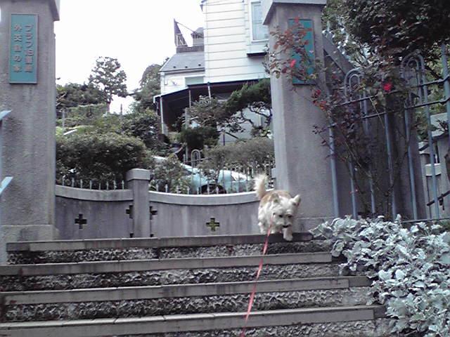 10月12日暑い犬