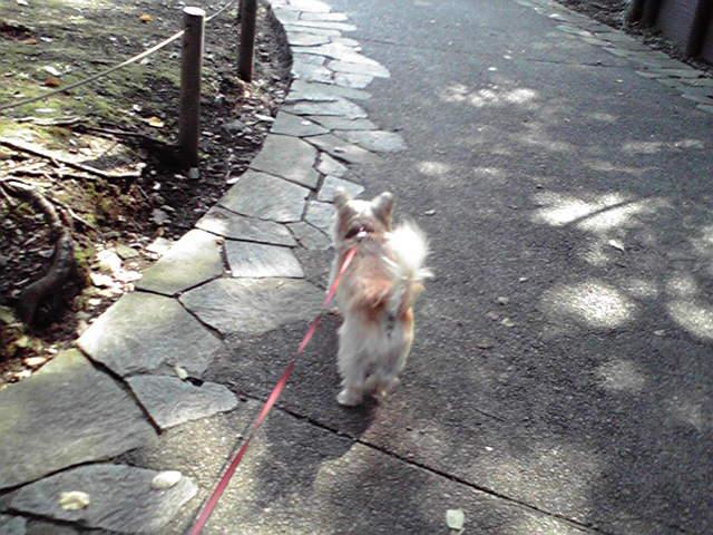 10月13日崖の上の犬