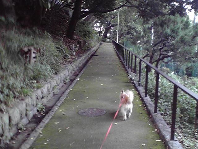 10月14日めっかった犬