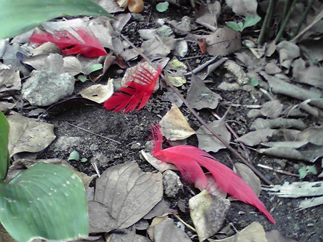 赤い羽募金の残骸