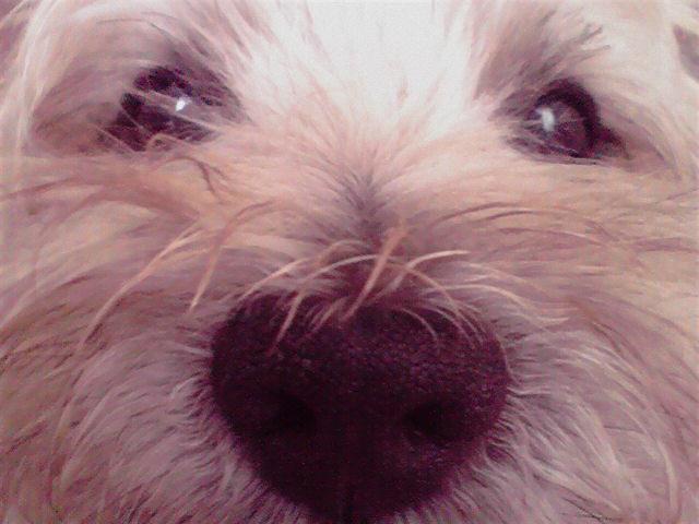 10月20日飽きた犬
